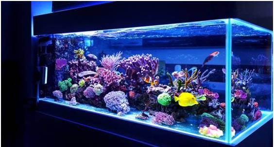 Aquarium Decoration Items and Fish Food for Sale