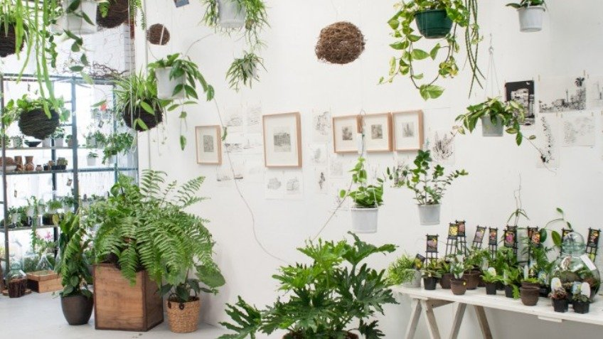 What Are The Most Important Reasons That You Should Indulge In The Online Purchasing Of Plants?
