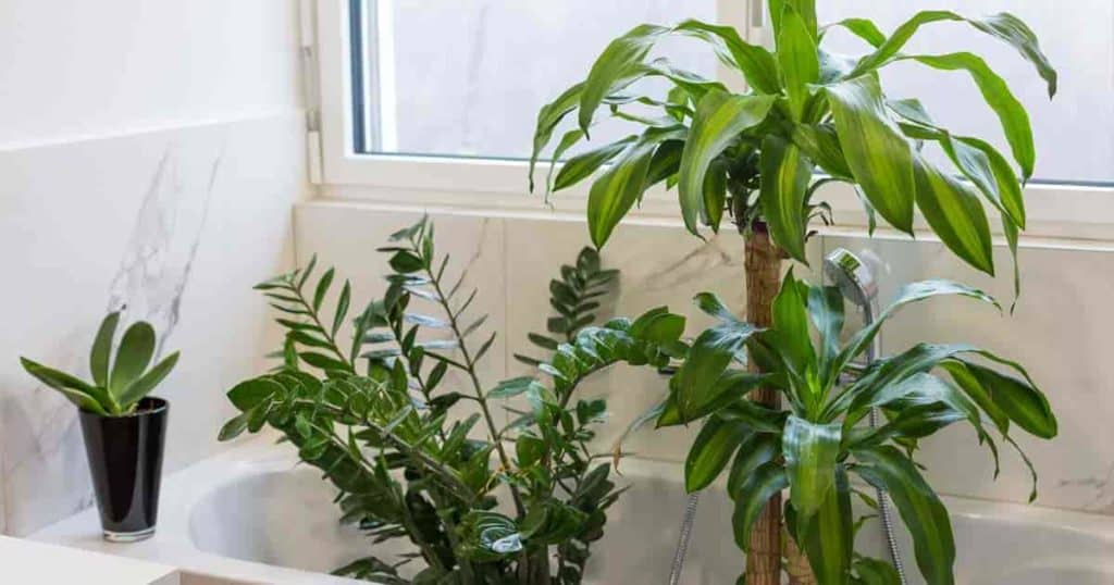 Common Mistakes While Transporting Houseplants