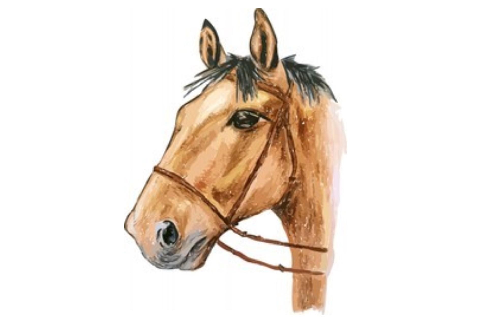 draw horse eye